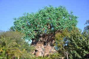 Animal Kingdom theme park in Walt Disney World Florida