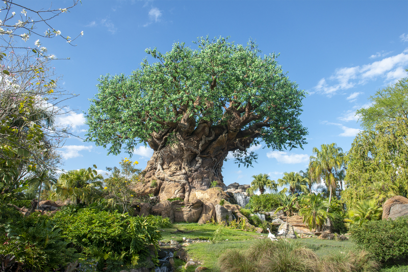 best-time-to-visit-disney-world-weather-wise