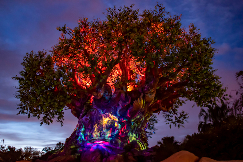 Tree-of-life-during-Disney-after-hours-animal-kingdom